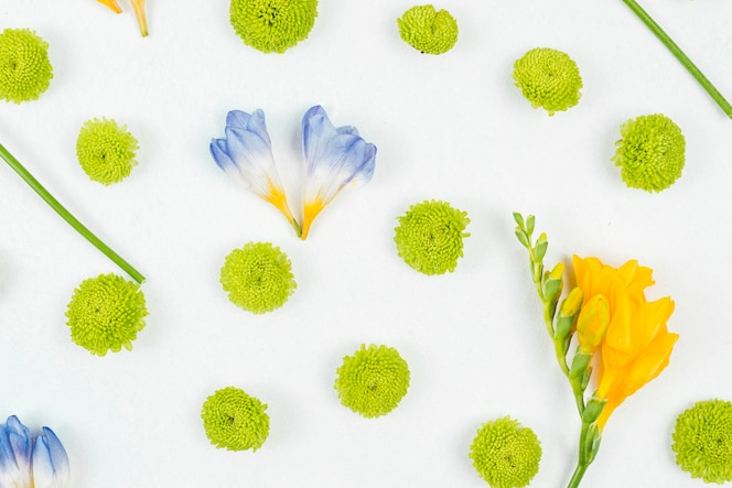 Teste padrão de flor no fundo branco