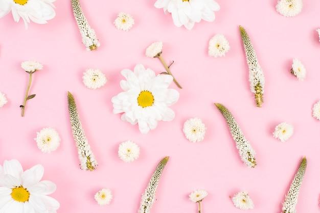 Teste padrão de flor no pano de fundo rosa