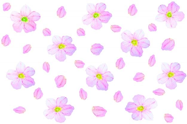 Teste padrão floral da aquarela sem emenda em um fundo branco.