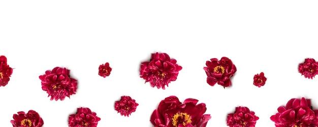 Teste padrão floral de flores peônia vermelha no branco