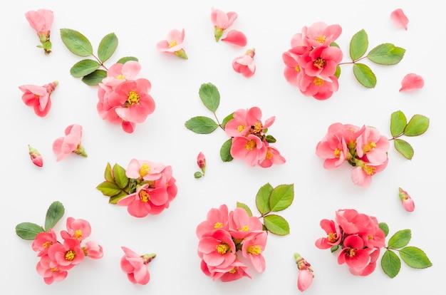 Teste padrão floral decorativo