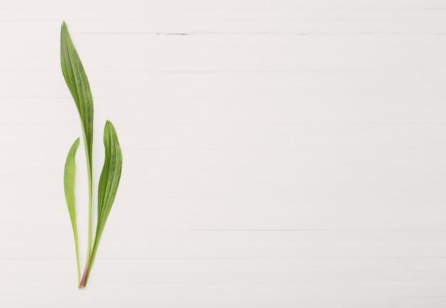 Teste padrão floral em fundo branco de madeira