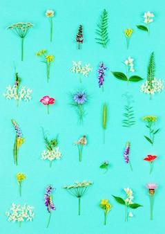 Teste padrão floral feito de flores curas selvagens e ervas na hortelã