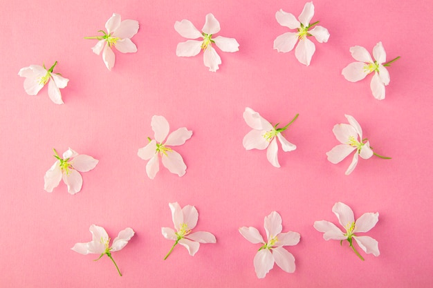 Teste padrão floral feito de flores de árvore de maçã em fundo amarelo. composição de flores plana leigos