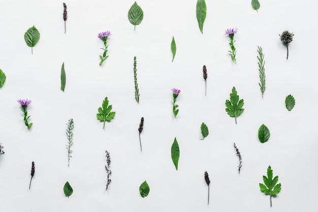 Teste padrão floral feito de folhas verdes, ramos no fundo branco