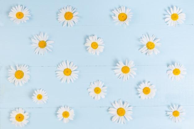Teste padrão floral verão com flor de camomila margarida sobre fundo azul de madeira vintage.