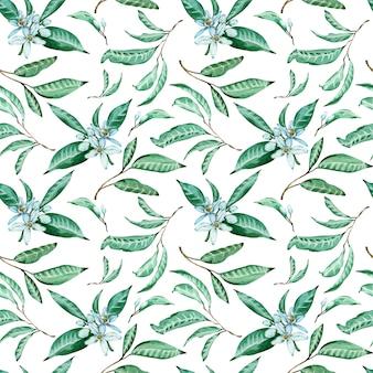Teste padrão sem emenda de flores e de folhas da tangerina no fundo branco. aquarela fundo tropical.
