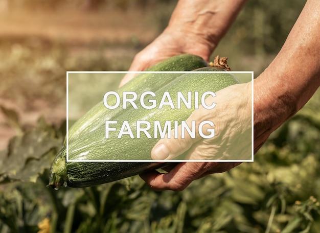 Texto de agricultura orgânica sobre mãos de fazendeiros segurando uma colheita verde natural de abobrinha