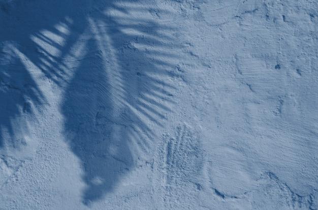 Textuer abstrato do fundo da folha de palmeira tropica das sombras em um muro de cimento. cor azul clássica. cor do ano 2020.