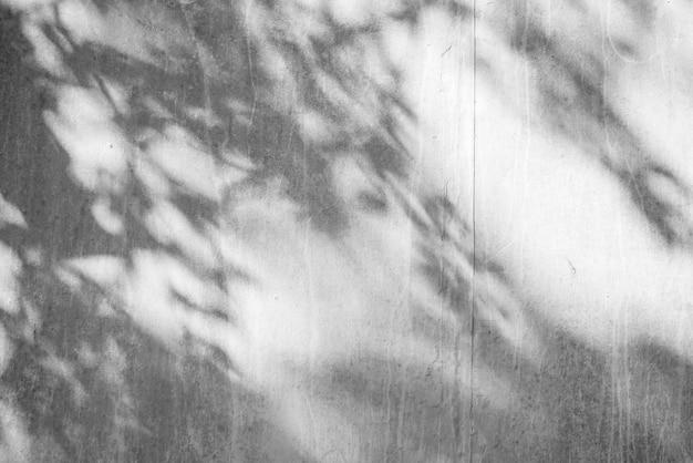 Textuer preto e branco do fundo abstrato da folha das sombras em uma parede concreta