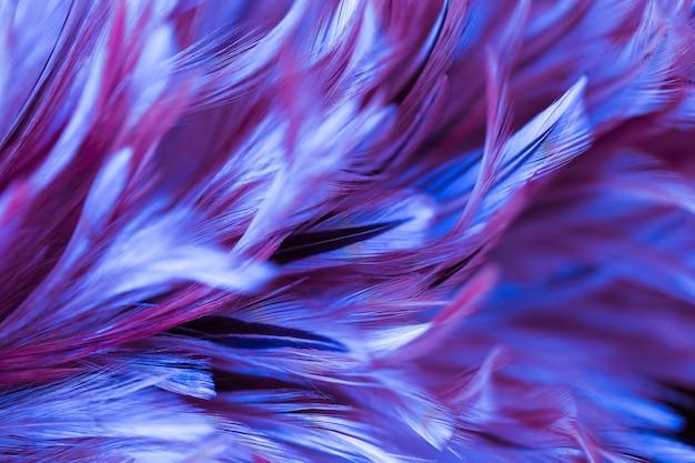 Textura abstrata da pena da galinha para o fundo, cor macia e estilo do borrão