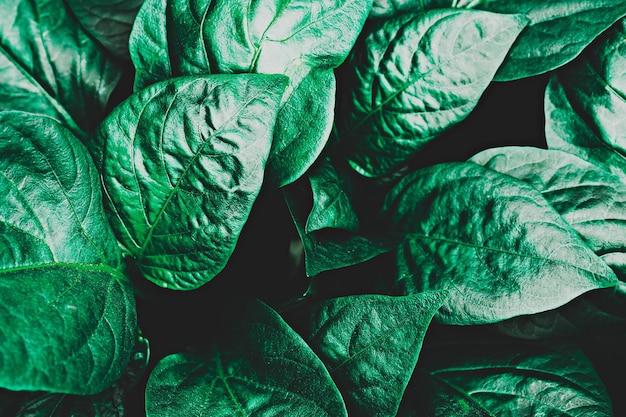 Textura abstrata de folhas verdes, fundo da natureza