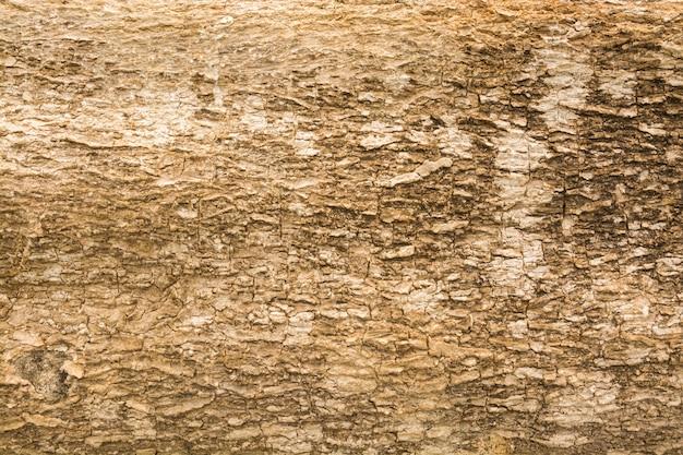 Textura abstrata de fundo de casca de madeira marrom