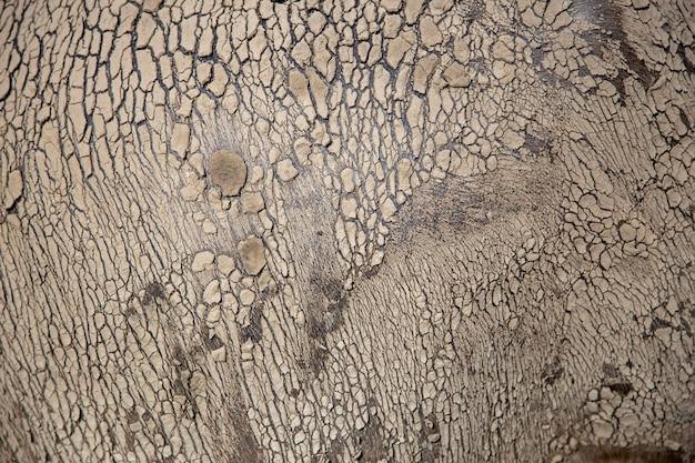 Textura abstrata de pele de búfalo com giz de cera