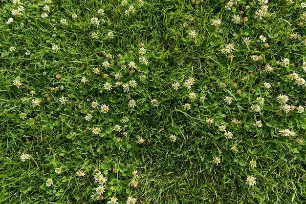 Textura abstrata, grama verde-clara natural