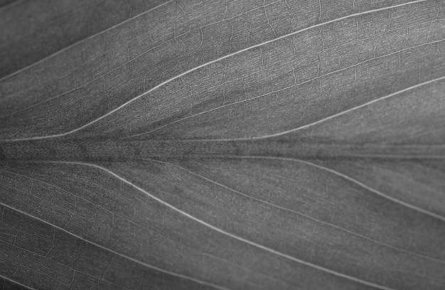 Textura bonita de folhas verdes