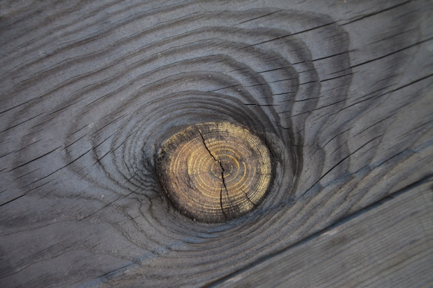 Textura cinza madeira