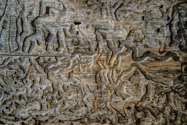 Textura colorida abstrata bonita do grunge comido insetos superfície de madeira