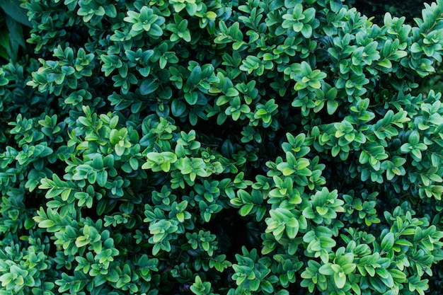 Textura com folhagem verde luxuosa fundo