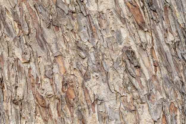 Textura da árvore de casca.