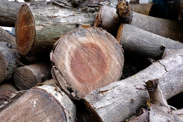 Textura da árvore de madeira