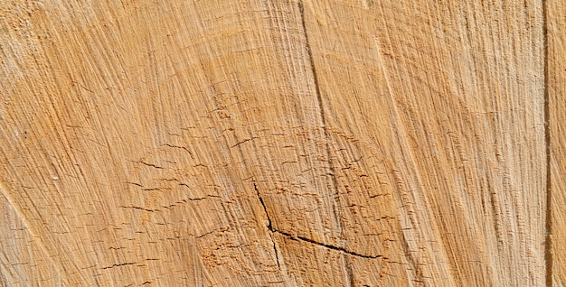 Textura da árvore