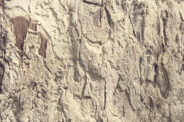 Textura da casca de árvore. uso de madeira da textura do grunge velho para com a cor tonificada.