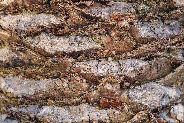 Textura da casca de palmeira. belo padrão de casca. fechar-se.