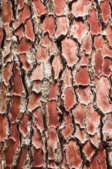 Textura da casca do pinheiro para o fundo