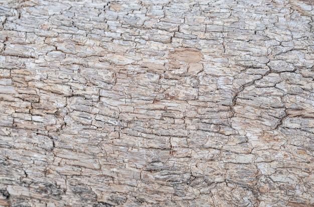 Textura da casca marrom de uma árvore