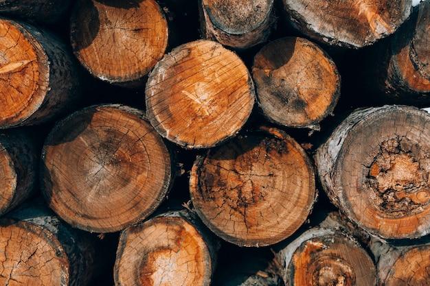 Textura da floresta de coníferas é dobrada, derrubada de árvores, lenha.