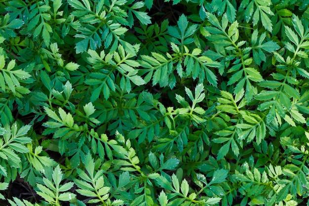Textura da folha verde