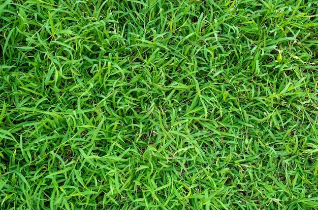 Textura da grama verde para o fundo. teste padrão do gramado e fundo verdes da textura.