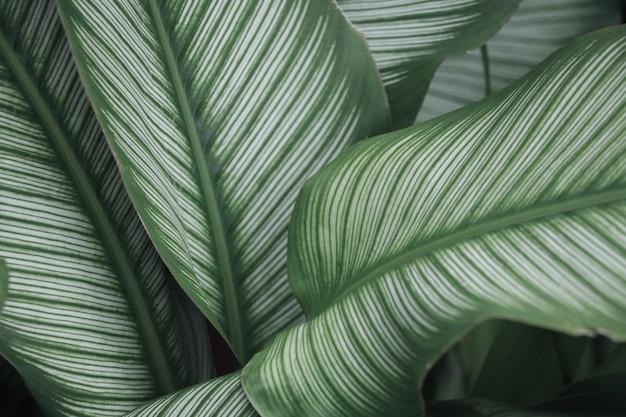 Textura da natureza deixa a árvore de design natural no jardim