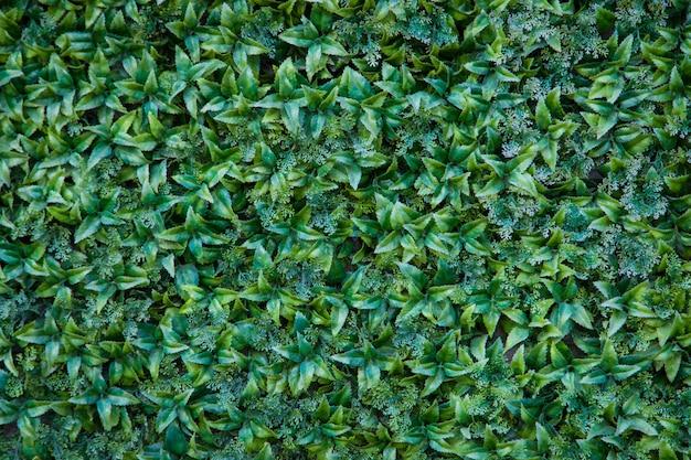 Textura da parede de grama verde para design de pano de fundo e parede de eco e cortada para obras de arte.