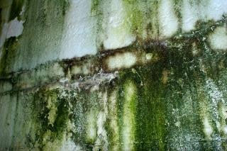 Textura da parede verde