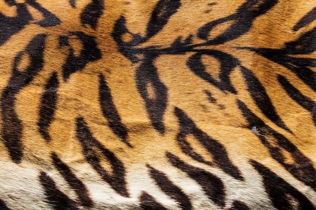 Textura da pele de tigre real