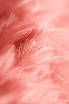 Textura da pena das galinhas do pássaro do borrão para o fundo, fantasia, sumário, cor macia do projeto da arte.