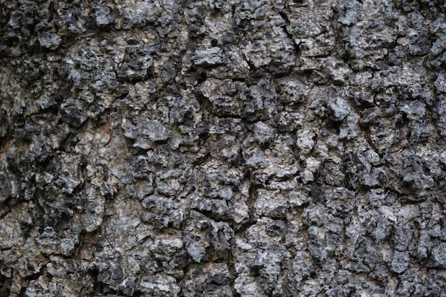 Textura da superfície da pele áspera da árvore. textura do close up áspero da superfície da pele da árvore para o fundo