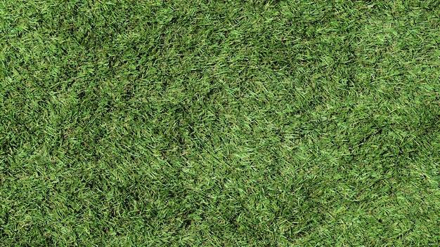 Textura da superfície do gramado