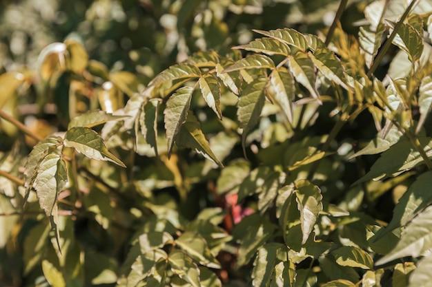 Textura da vegetação natural