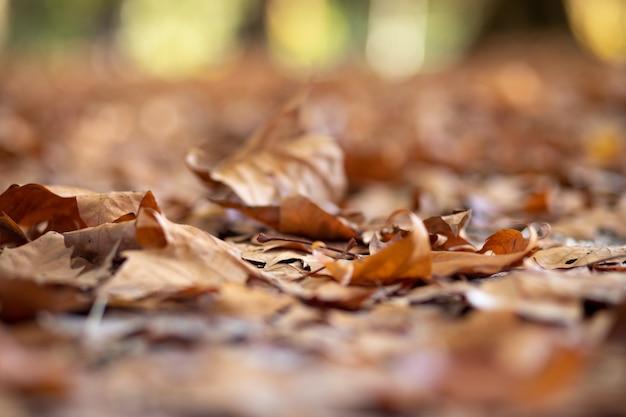 Textura das folhas caídas da árvore no chão no outono - foco seletivo.