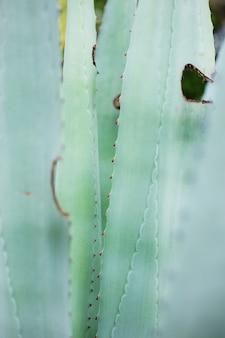 Textura das folhas da planta com fundo.