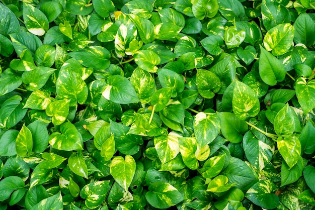 Textura das folhas de plantas