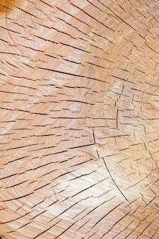 Textura, de, a, corte, tronco árvore