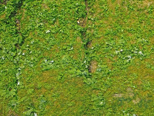 Textura de algas marinhas