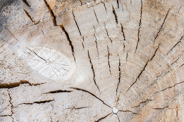 Textura de árvore de fundo