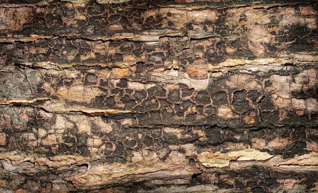 Textura de árvore escura. fundo de madeira com cores claras e escuras