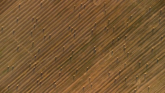 Textura de campo agrícola com vista superior de rolos de feno