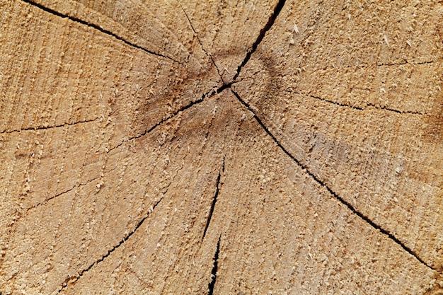 Textura de carvalho no corte.